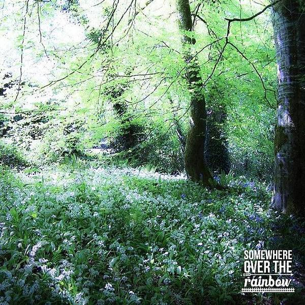Fantasy Wall Art - Photograph - The Magical Forest Around Blarney by Teresa Mucha