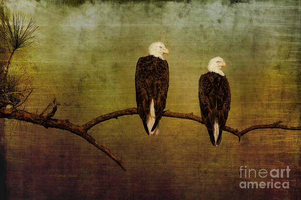 Photograph - The Majestic Pair by Deborah Benoit