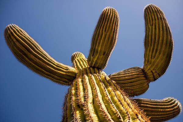 Photograph - The Majesty Of Saguaro Cactus by  Onyonet  Photo Studios