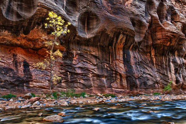 Wall Art - Photograph - The Mall On The Narrows by Juan Carlos Diaz Parra