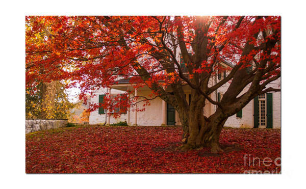 Photograph - The Maple At Valley Forge by Rima Biswas