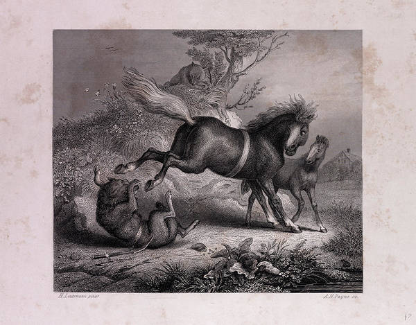 Reynard Wall Art - Drawing - The Mare And The Wolf by English School
