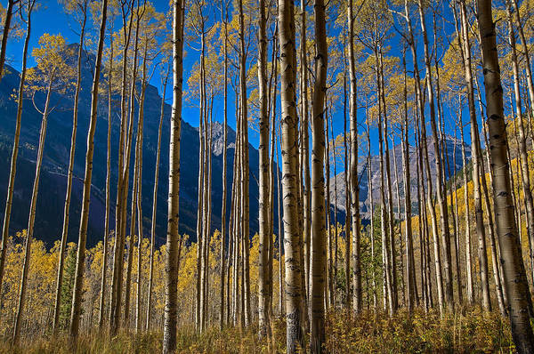 Maroon Bells Photograph - The Maroon Curtain by Mike Berenson