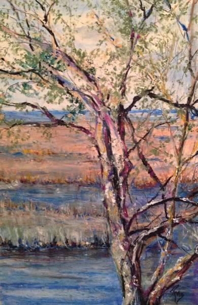 The Marsh And The Live Oak Art Print