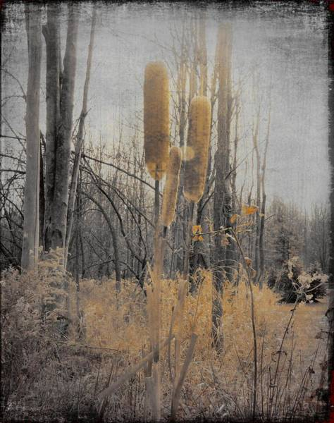Bulrush Wall Art - Photograph - The Marsh by Gothicrow Images
