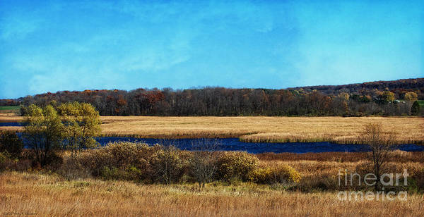 Horicon Wall Art - Photograph - The Marsh by Mary Machare