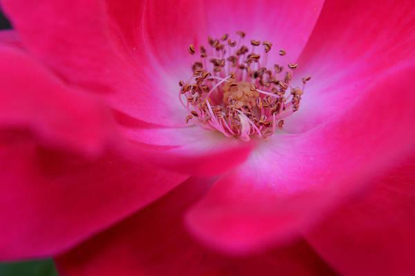 Photograph - The Melody Of A Flower by Melanie Moraga