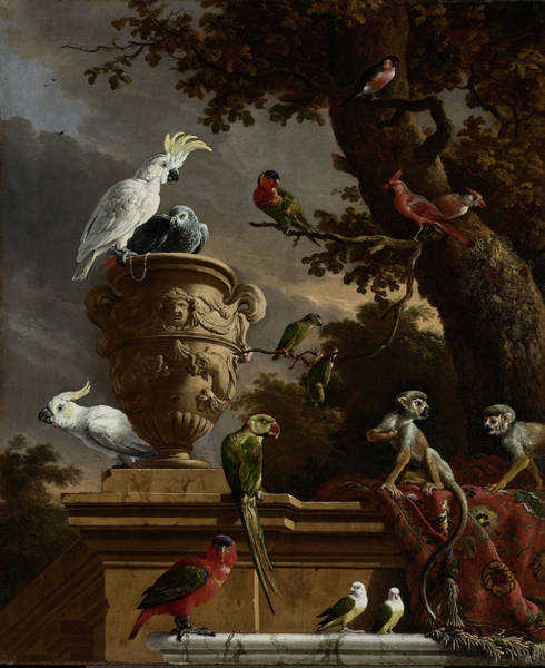 Wall Art - Drawing - The Menagerie, Melchior D Hondecoeter by Litz Collection