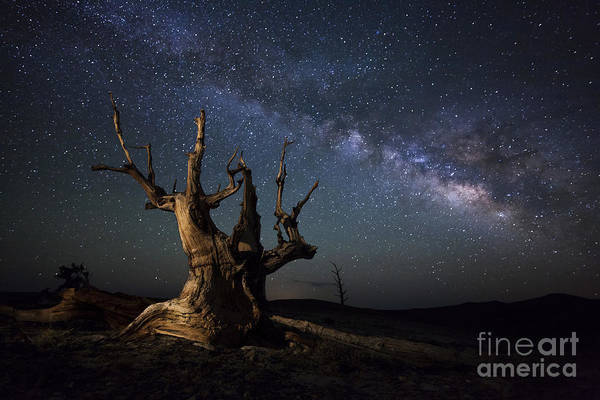 Photograph - The Milky Way And A Dead Bristlecone by Dan Barr