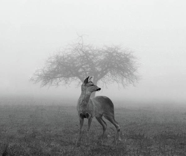 No-one Wall Art - Photograph - The Mist by Nicolas Piñera Martinez
