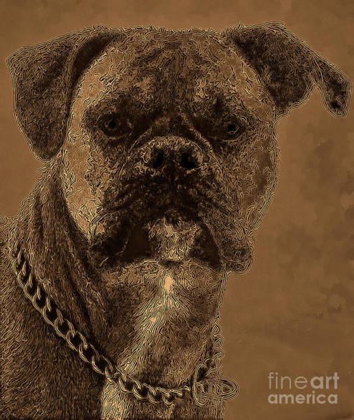 Photograph - The Modern Boxer Bulldog by Lesa Fine