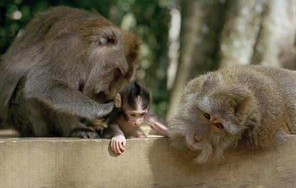 Photograph - The Monkey Forest by Shaun Higson