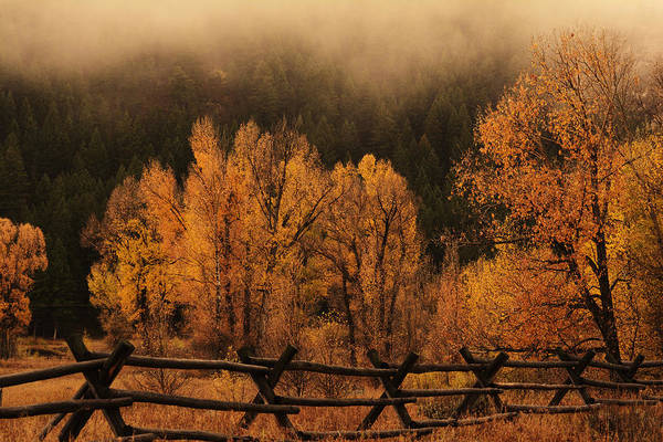 Photograph - The Mood Of Autumn by Craig Ratcliffe