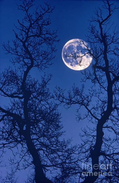 Photograph - The Moon by Hermann Eisenbeiss
