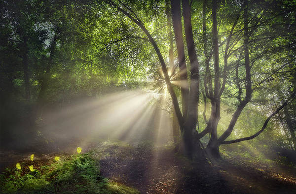 Sunbeam Photograph - The Morning Light by Fran Osuna
