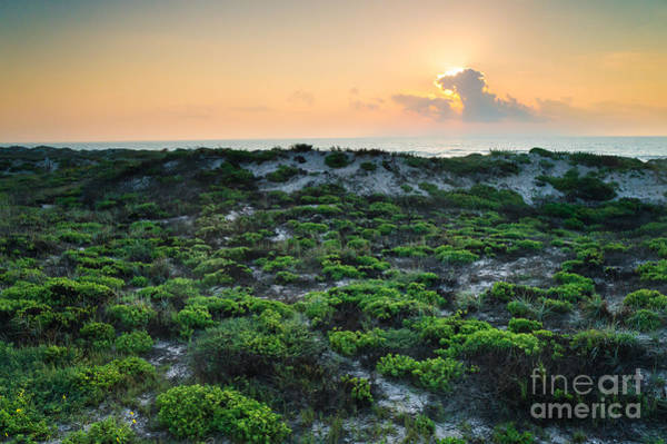 Wall Art - Photograph - The Morning Sun And The Green Seashore by Ellie Teramoto