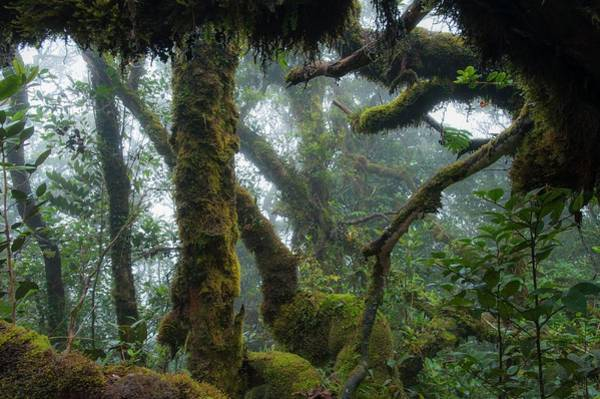 West Highlands Photograph - The Mossy Forest Of The Cameron Highlands by Scubazoo