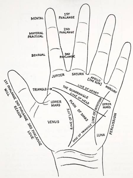 Palm Reading Wall Art - Drawing - The Mount Aras Of The Hand by English School