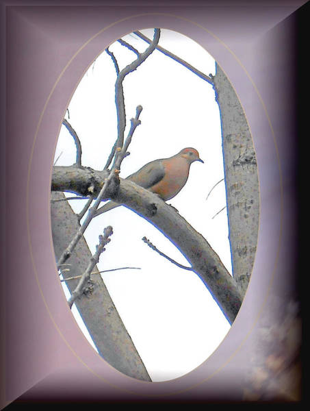 Wall Art - Photograph - The Mourning Dove by Patricia Keller