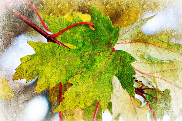 Photograph - The Mysterious Leaf Abstract by Andee Design