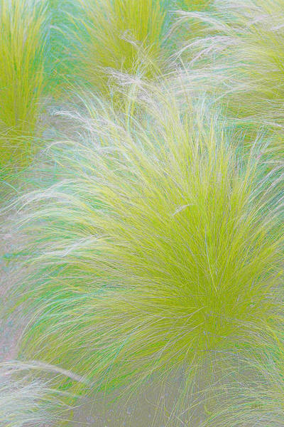 Chartreuse Photograph - The Nature Of Grass   by Ben and Raisa Gertsberg