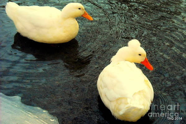 Monocacy Wall Art - Photograph - The Nearness Of You by Tami Quigley