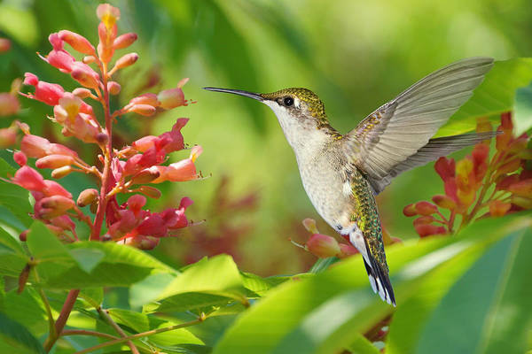 Photograph - The Nectar Of Life by Leda Robertson