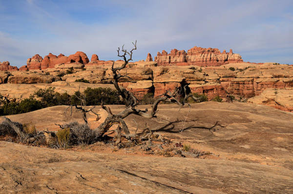 Photograph - The Needles At Canyonlands National Park by Tranquil Light  Photography