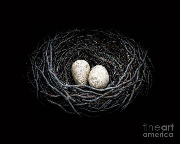 Birds Eggs Photograph - The Nest by Edward Fielding