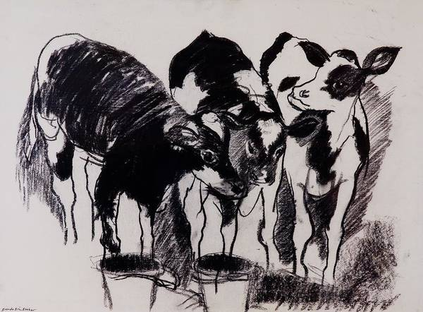 Farm Animals Photograph - The New Calves Charcoal On Paper by Brenda Brin Booker
