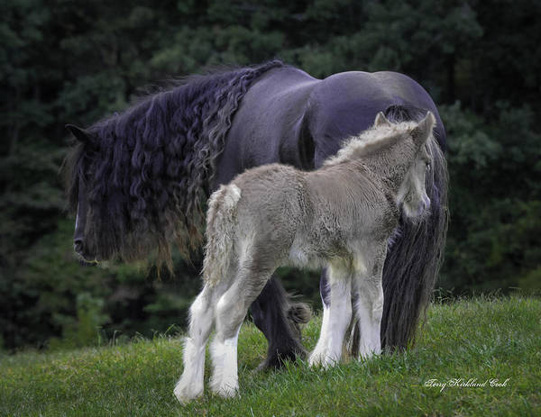 Photograph - The New Silver Foal by Terry Kirkland Cook