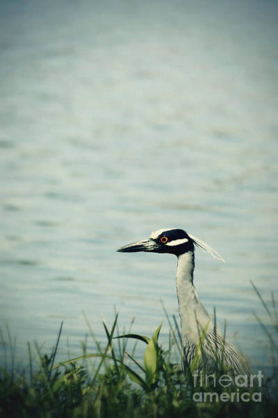 Wall Art - Photograph - The Night Heron by Trish Mistric