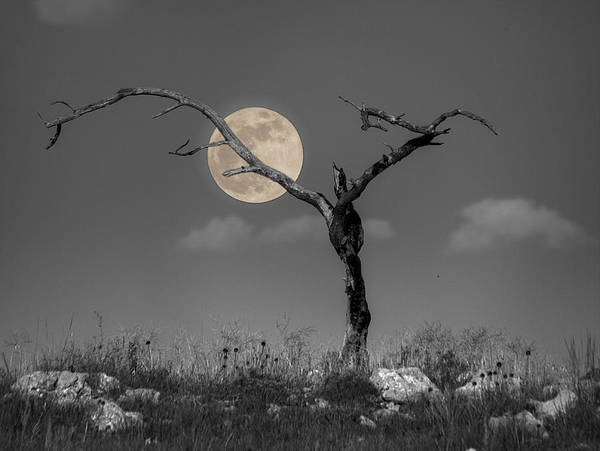 Photograph - The Night by HW Kateley