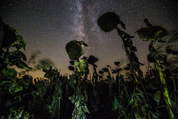 Wall Art - Photograph - The Night Of The Triffids by Aaron J Groen