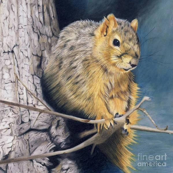 Drawing - The Nutcracker by Rosellen Westerhoff