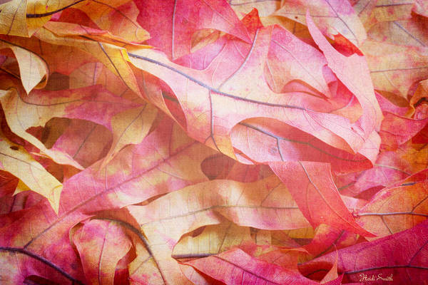 Wall Art - Photograph - The Oak Leaf Pile by Heidi Smith