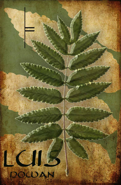 Eire Digital Art - The Ogham Luis Celtic Symbol by Kandy Hurley