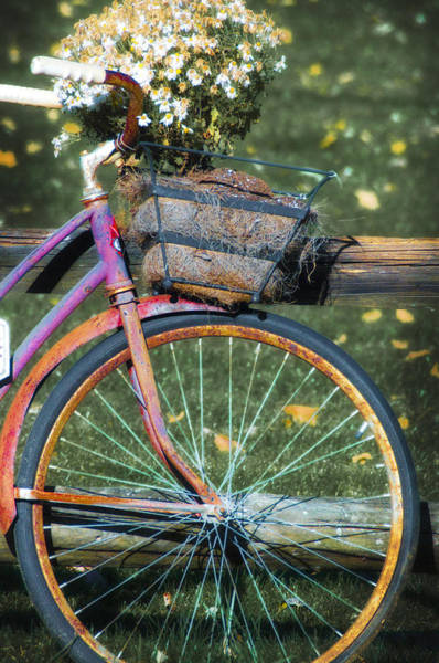 Photograph - The Old Bicycle by Bill Cannon