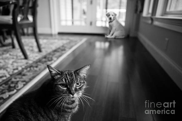 Confrontation Wall Art - Photograph - The Old Cat And The New Puppy by Diane Diederich