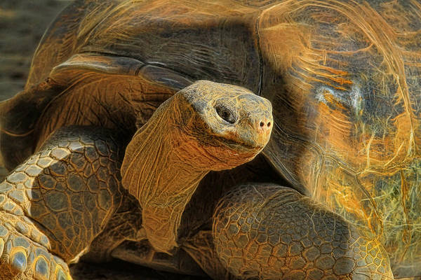 Tortoise Shell Photograph - The Old Guy by Deborah Benoit
