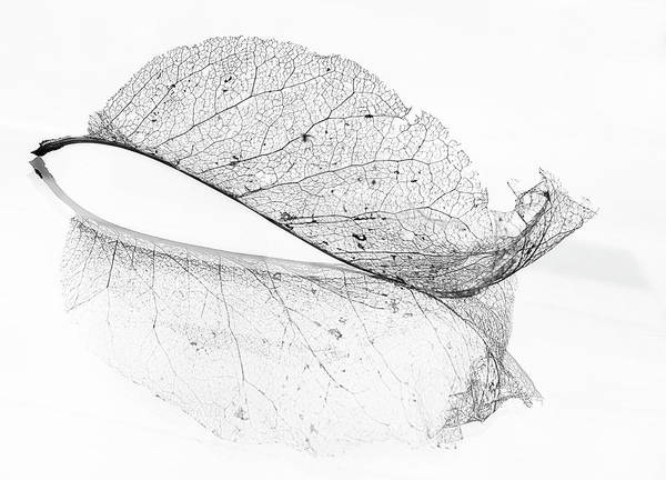 High Key Wall Art - Photograph - The Old Leaf by Katarina Holmstr?m