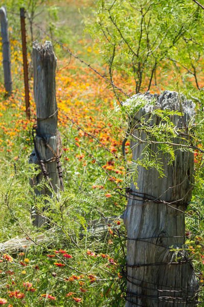 1431 Photograph - Marble Falls Texas Old Stalwart Fence Posts by JG Thompson