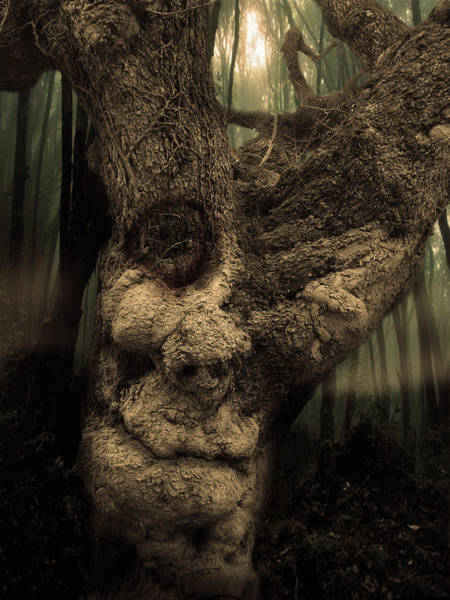 Wall Art - Photograph - The Old Treant by Jeremy Martinson