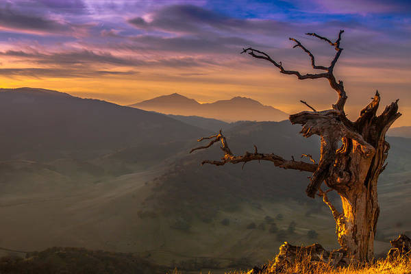 East County Photograph - The Old Tree And Diablo by Marc Crumpler