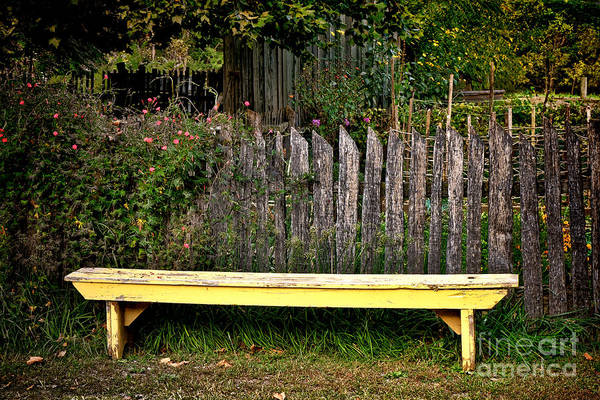 Vegetable Patch Wall Art - Photograph - The Old Yellow Garden Bench by Olivier Le Queinec