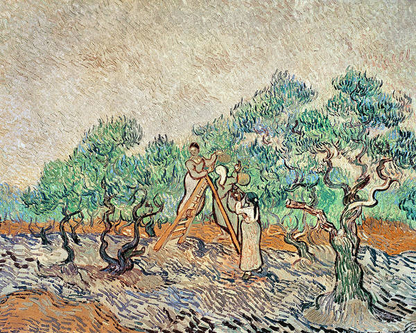 Wall Art - Painting - The Olive Orchard, 1889  by Vincent van Gogh