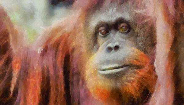 Painting - The Orangutan by Dan Sproul