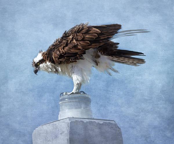 Wall Art - Photograph - The Osprey  by Kim Hojnacki