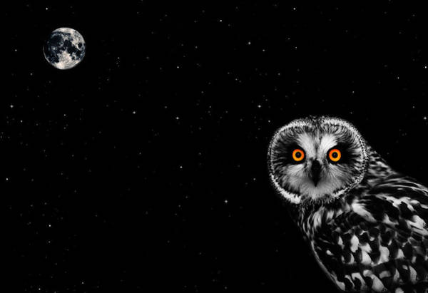 White Moon Photograph - The Owl And The Moon by Mark Rogan