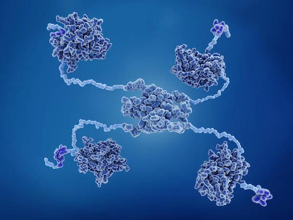 Wall Art - Photograph - The P53 Tumor Suppressor Protein by Juan Gaertner